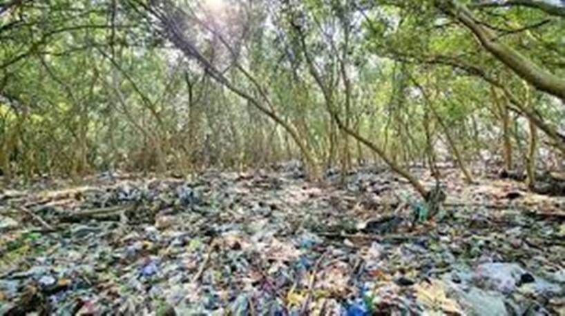 Philippines : dans la baie de Manille, les dernières forêts de mangrove étouffent sous le plastique