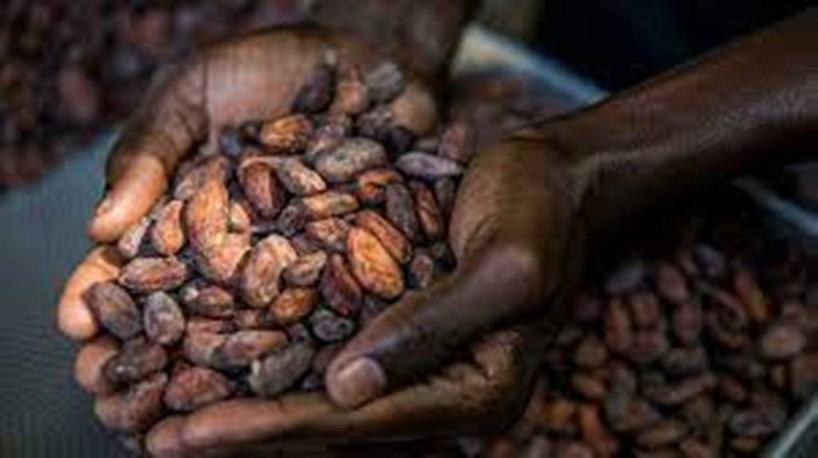 Nouvelle ère pour les exportateurs ivoiriens de cacao