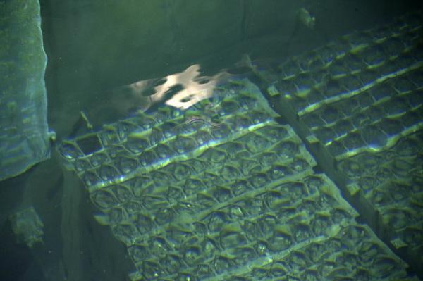 Image montrant les barres de combustibles dans le réacteur n°4 de la centrale de Fukushima. REUTERS/Tomohiro Ohsumi