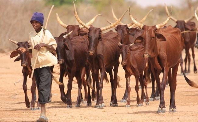 Une plateforme web et sms pour le développement de l'élevage au Sénégal