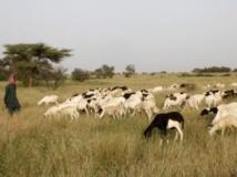 C'est une querelle entre un villageois de Borgou et des éleveurs qui serait à l'origine du conflit sanglant. Getty Images / Godong/Contributeur