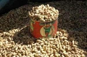 Campagne de commercialisation de l'arachide : les producteurs face à la presse demain