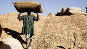 Serigne Mboup : « Les huiliers prennent en otage la filière arachidière alors qu'ils n'y mettent pas le prix »