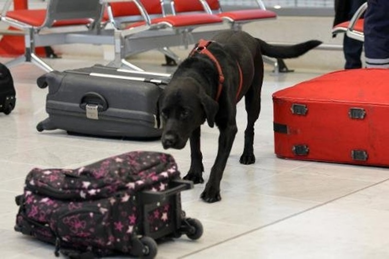 Un voyageur récupère sa valise égarée avec 6 kilos de cocaïne