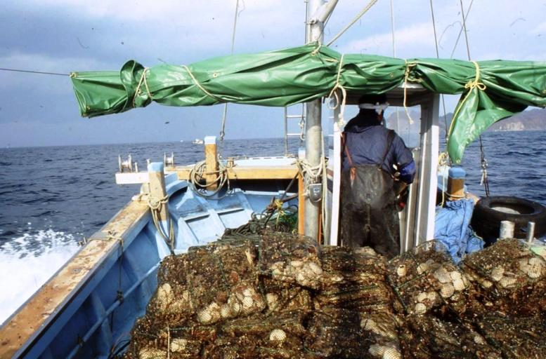 « Il faut dire non aux compagnies de pêche frauduleuses » déclare Greenpeace
