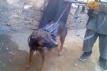 Afghanistan : les talibans affirment avoir capturé un chien des forces internationales