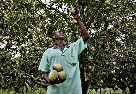 Soutenez les paysans, éleveurs et femmes rurales africains MAINTENANT !