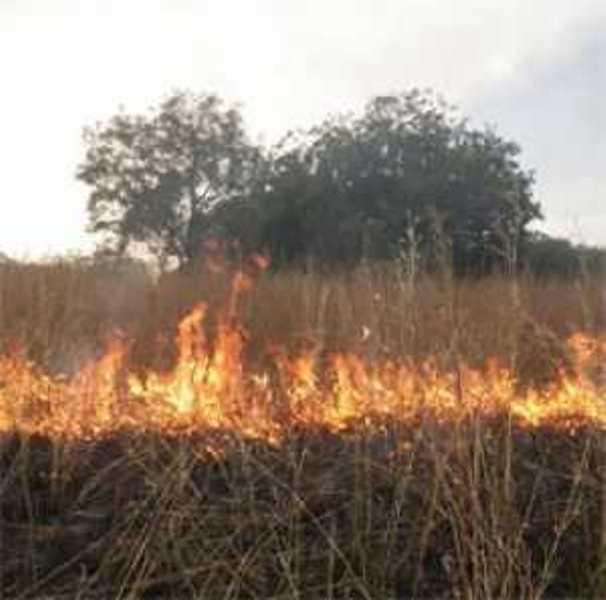 Le Ranch de Doli toujours la proie des flammes