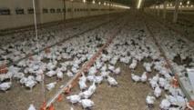 PSE: des investissements pour l'élevage au Sénégal