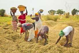 IPAR: quelles politiques agricoles et rurales concertées au Sénégal ?