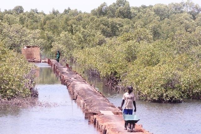 Impact de l'éco-tourisme à Toubacouta : quand les jeunes désertent l'école pour se faire de l'argent