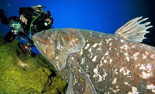 Il a rencontré le plus vieux poisson du monde