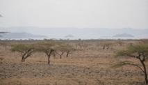 Kenya : le plus grand projet éolien en Afrique sur les rails