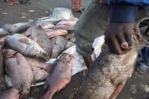 Pêche illégale : L'Europe sanctionne trois pays