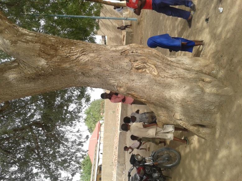 l'arbre fétiche de Clément