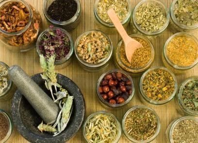 Ouverture d'un colloque : la médecine des plantes à l'honneur