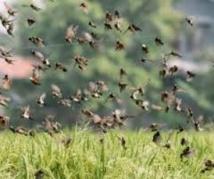 """Docteur Dogo Seck """"Le riz local nourrit plus les oiseaux granivores que les humains"""""""