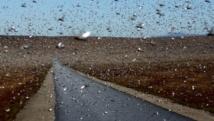 Un essaim de criquets près de la localité de Sakaraha, au sud-ouest de Madagascar, le 27 avril 2013. AFP PHOTO/BILAL TARABEY.