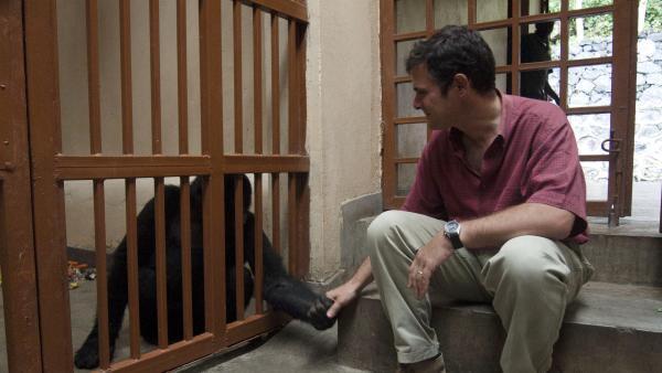 Parc des Virunga en RDC: des employés de WWF menacés de mort