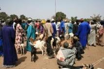 Département de Mbour: Les réseaux de vol de bétail  hantent le sommeil des populations