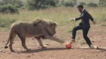 Image: Il joue au foot avec trois lions en pleine savane