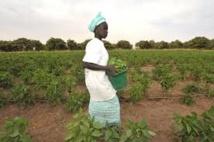 Spéculation foncière au Sénégal: 638 000 ha de terres spoliés, entre 2000 et 2012