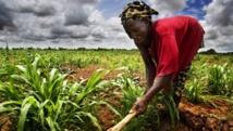 Mali: les litiges fonciers en tête des récriminations de la population