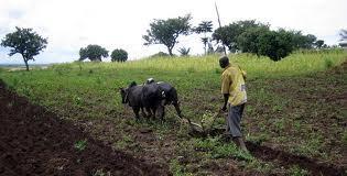 Les dirigeants africains ont réaffirmé leur intention de consacrer 10 % de leurs budgets nationaux au développement agricole