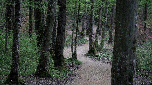 Meuse : disparue depuis quinze jours, une quinquagénaire se cachait dans la forêt