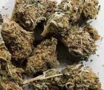 Recrudescence du trafic de drogue : l'OCRTIS a épinglé 10 personnes avec 19 boulettes de haschich et 6 Kg de chanvre