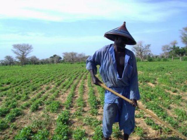 Les Domaines Agricoles Communautaires démarrent à « Car-Car »