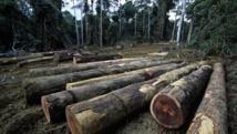 En République démocratique du Congo, 77% de émissions de gaz à effet de serre proviennent de la déforestation et de la dégradation des forêts. Getty Images/Peter Arnold/Martin Harvey