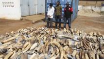 Dans le port de Lomé, au Togo, un Vietnamien et deux Togolais arrêtés pour trafic d'ivoire après la saisie de 1.6 tonnes d'ivoire, prêtes à être embarquées pour le Vietnam. REUTERS/Noel Kokou Tadegnon