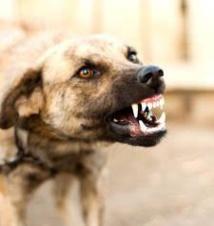"""ça chauffe à Tivaoune Peulh: six (6) personnes tuées par un chien, 3 membres d'une famille convoqués pour """"anthropophagie"""""""