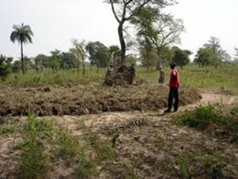Alerte à Matam : les pluies pas au rendez-vous, les agriculteurs  n'ont rien récolté