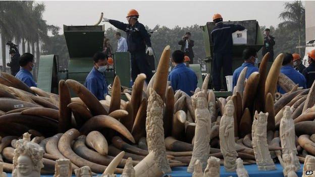 La Chine a pour la première fois détruit une grande quantité d'ivoire