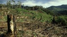 Une forêt tropicale décimée à Madagascar. Daniel J. Cox