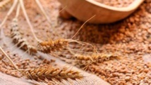 Agriculture:  les acteurs veulent une prise en compte des changements climatiques dans les stratégies