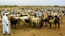 Le Conseil constitutionnel estime notamment que le projet de loi ne respecte pas la propriété privée quand il demande aux agriculteurs de clôturer leurs champs ou aux éleveurs de surveiller leur bétail la nuit. Ici, des éleveurs à Ndjamena en 2001.
