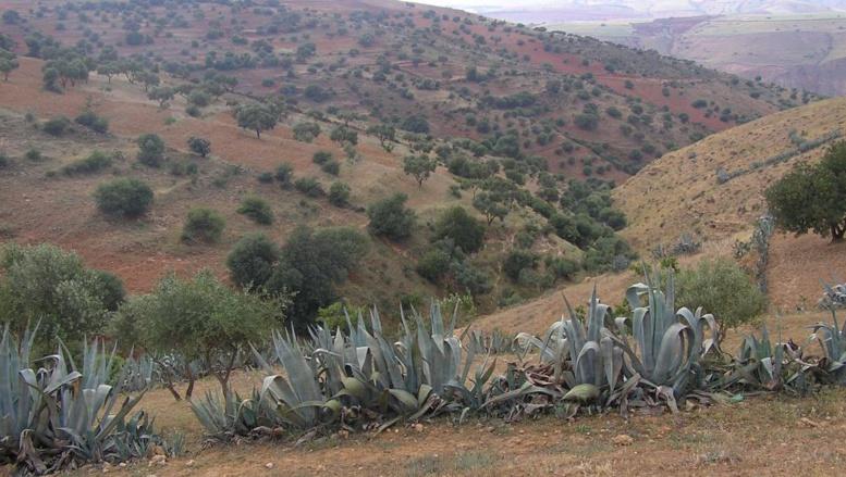 A Relizane, au sud-ouest d'Alger, des charniers ont été découverts par un militant des droits de l'Homme. (cc)Wikipédia/isischa