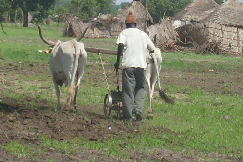 Tragédie dans le monde rural: Quand le servage s'installe dans l'indifférence généralisée