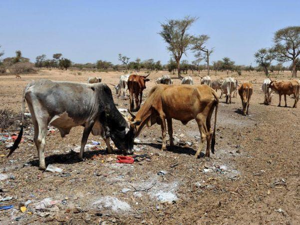 Catastrophes climatiques : le Sénégal reçoit 16,5 millions de dollars  comme indemnité d'assurance Agricole