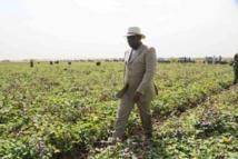 Autosuffisance en riz en 2017: le président Sall met à contribution l'Armée, la police et la gendarmerie