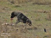 Ziguinchor-Découverte macabre: Des chiens dévorent le corps sans vie d'un bébé
