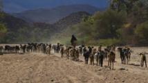 L'agriculture et l'élevage sont les piliers de l'économie du Niger, mais seulement 15% des terres du pays sont cultivables