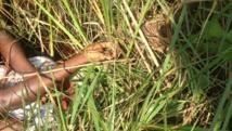 Les corps de deux jeunes frères, militants du MSD burundais, assassinés dans la nuit de dimanche 12 à lundi 13 juillet ont été retrouvés ligotés dans un quartier de la commune de Cibitoke.