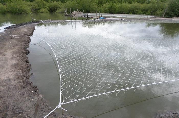 Ziguinchor : Terre de pisciculture.