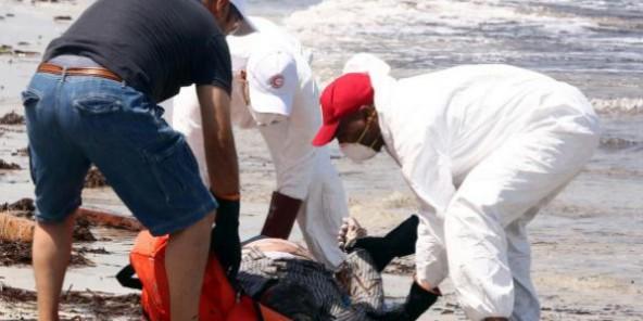 Naufrage au large de la Libye : au moins 111 cadavres récupérés