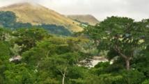 L'exploitation intensive et la monoculture, de palmiers à huile notamment, menacent les forêts du Gabon. Getty Images/Tim Makins