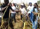 Khelcom : le coup d'envoi des récoltes donné ce 30 octobre